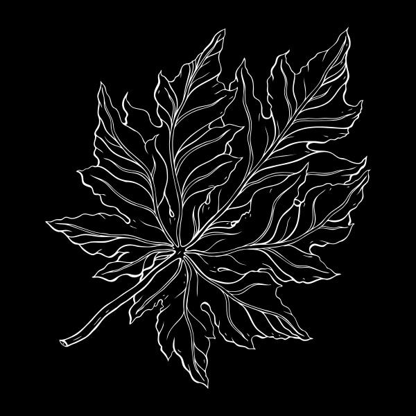 schoenes detailliertes blatt botanische handgezeichnet