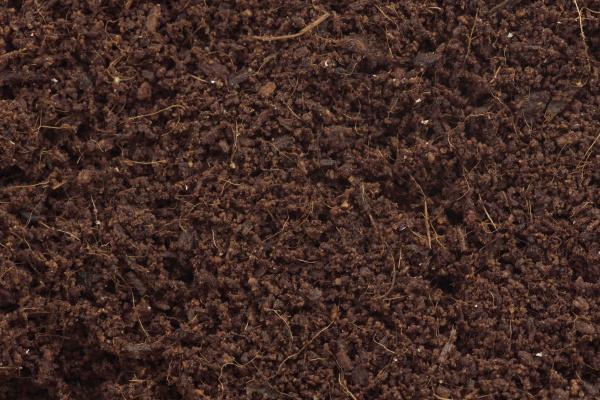kokoscoir oder coco coir wachsende medien