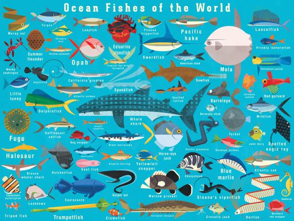 illustration vieler meeresfische aus aller welt