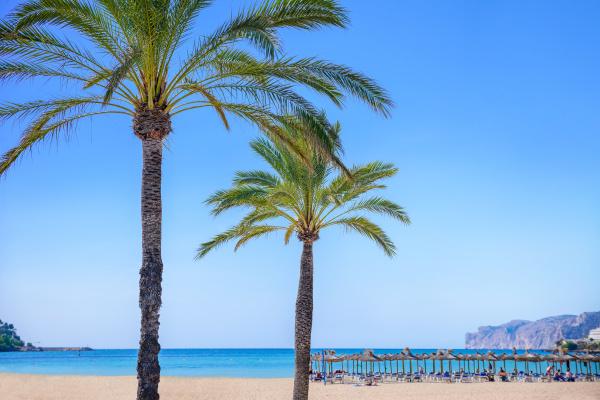 palmen mit einem strand im hintergrund