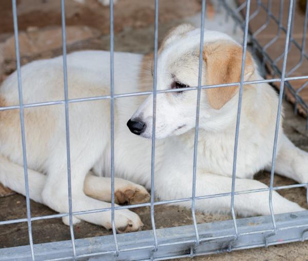 weisser geretteter hund liegt im tierheimkaefig
