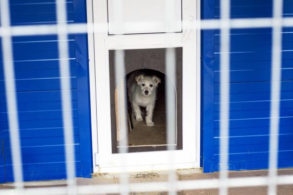 kleiner weisser hund im tierheim