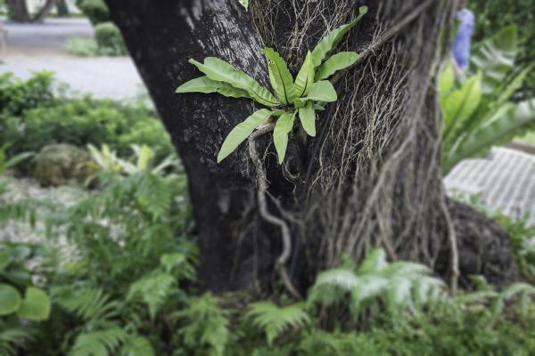 dschungelgruene blaetter im tropischen garten