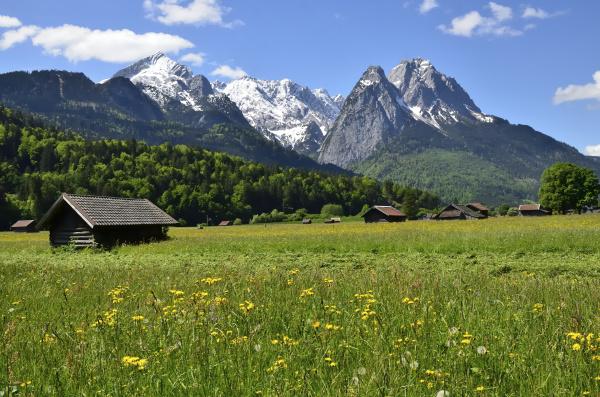 fruehlingswiese vor alpspitze und waxenstei garmisch