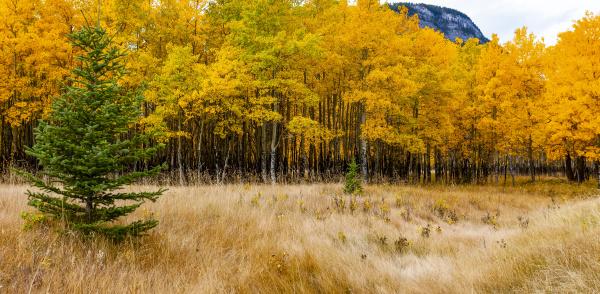 herbstfarben im banff national park alberta
