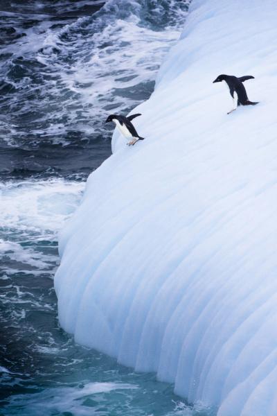 antarktis adelie pinguine springen von einem