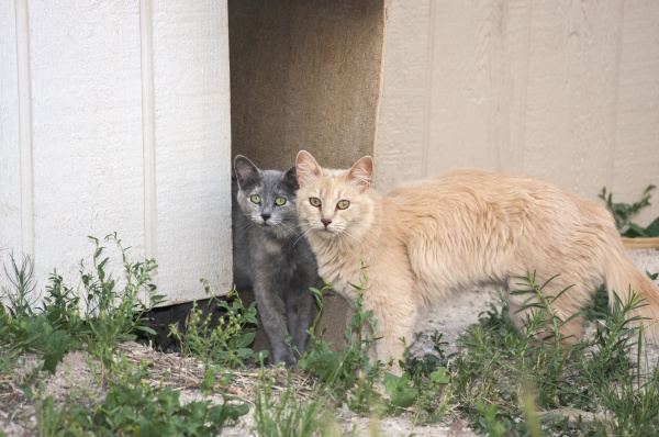 zwei katzen beobachten