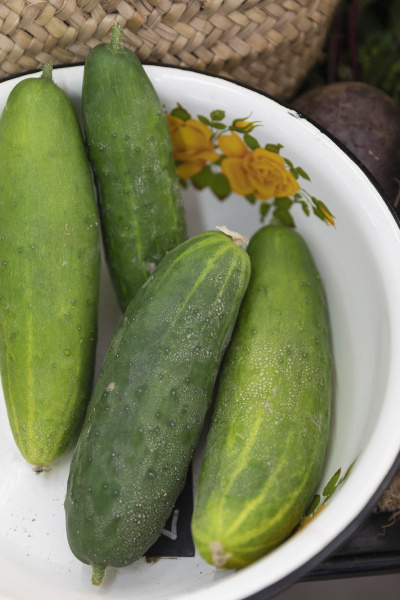 nahaufnahme bio gruene gurken in vintage