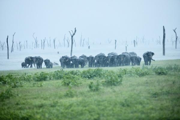 asian, elephant, family, at, kaudulla, national - 27360550