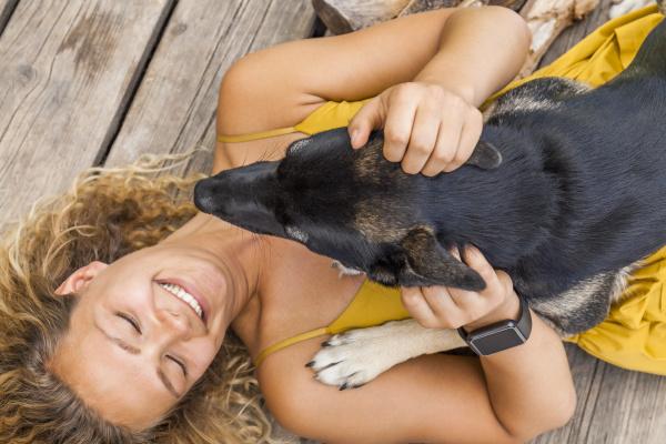 husky schaeferhund mischling hund und seine