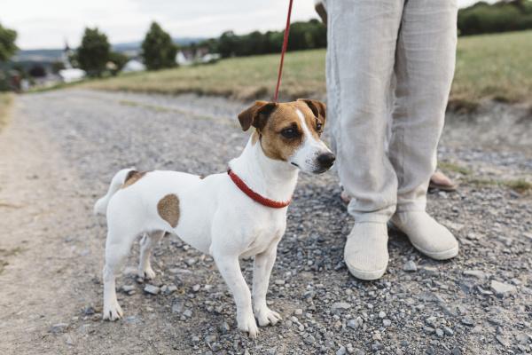 nahaufnahme eines jungen mit hund auf