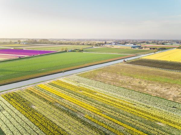luftaufnahme der bunten tulpenfelder in lisse