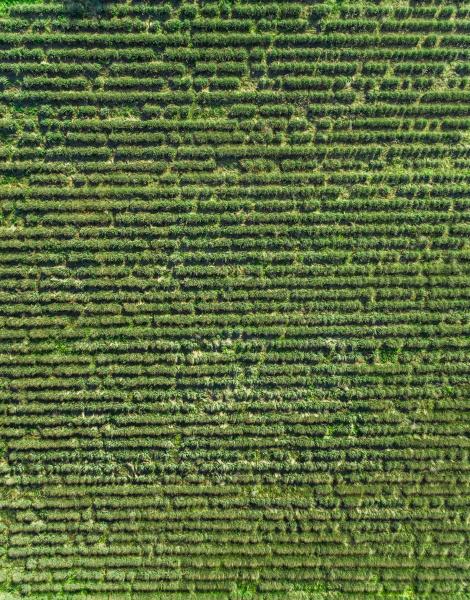 luftaufnahme des landwirtschaftlichen feldes in der