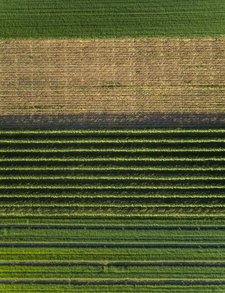 luftaufnahme der landwirtschaftlichen felder in der
