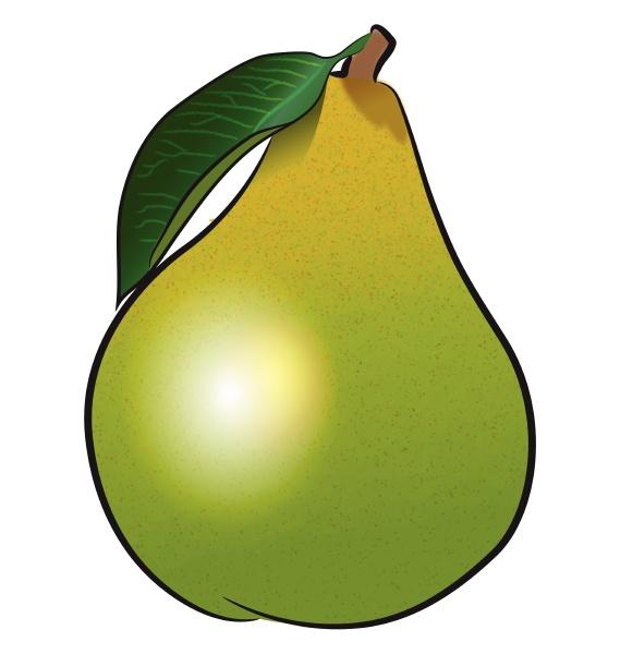 eine gruene birne frucht vektor oder