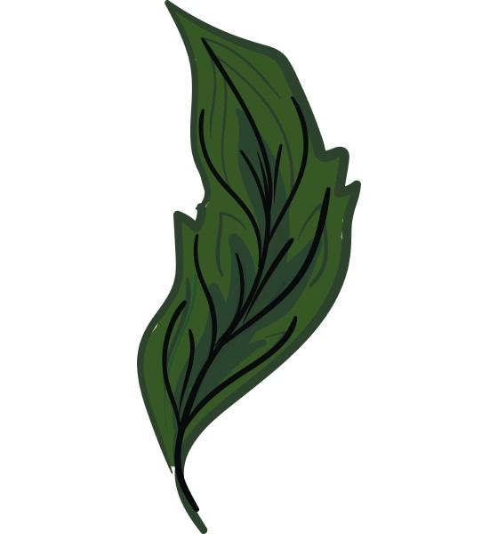 gruene feder mit vane vektor oder