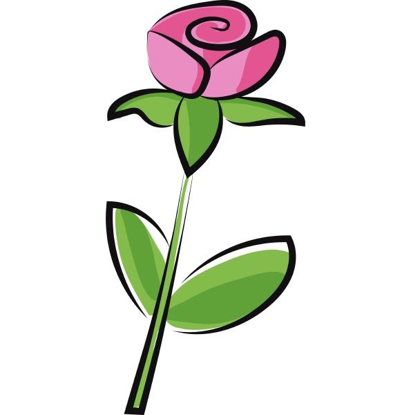 eine rosa und lila farbe rose