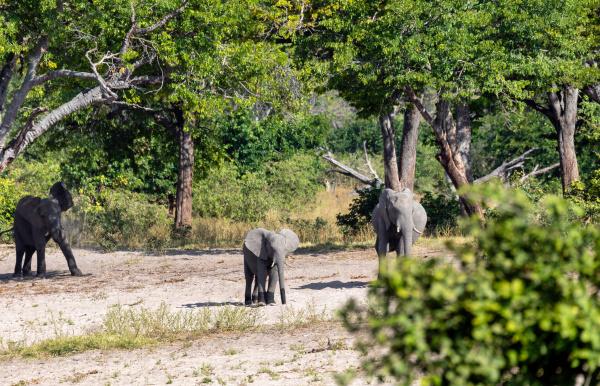 afrikanischer elefant namibia afrika safari wildtiere