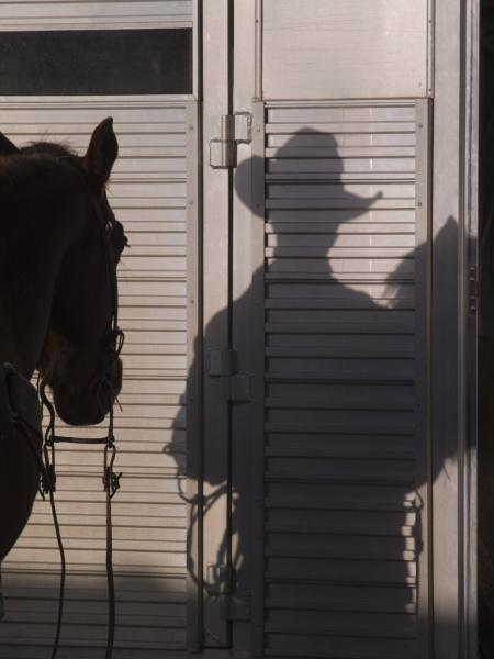 tucson arizona schatten eines pferdes