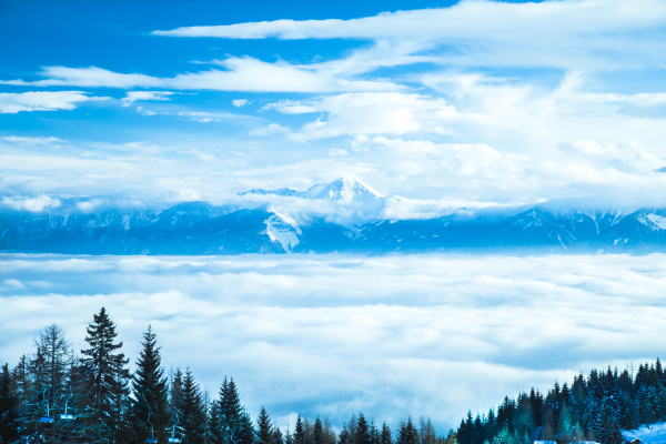 winterbäume, in, den, bergen, naturlandschaft - 27823488