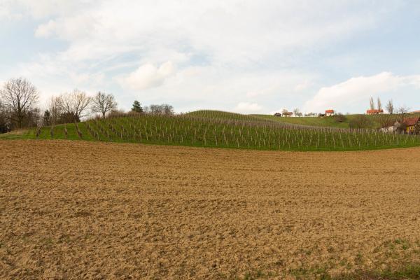 weinberglandschaft in der steiermark OEsterreich