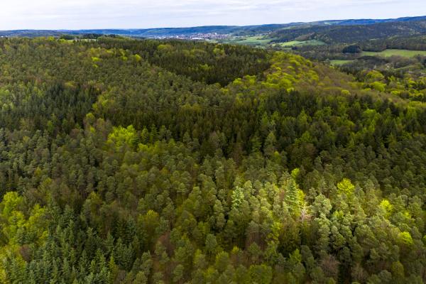 deutschland hessen luftaufnahme des gruenen ueppigen