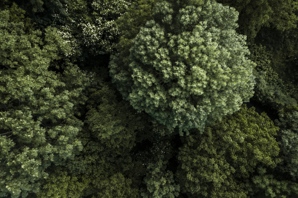 OEsterreich niederoesterreich luftaufnahme von gruenwaldbaeumen