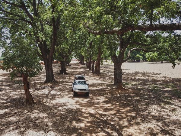 burkina faso 4x4 auto auf baumbestandenem