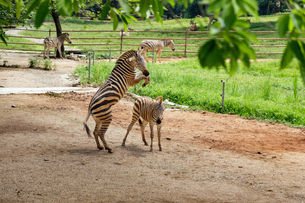 zebras, in, the, zoo, aviary - 28216192