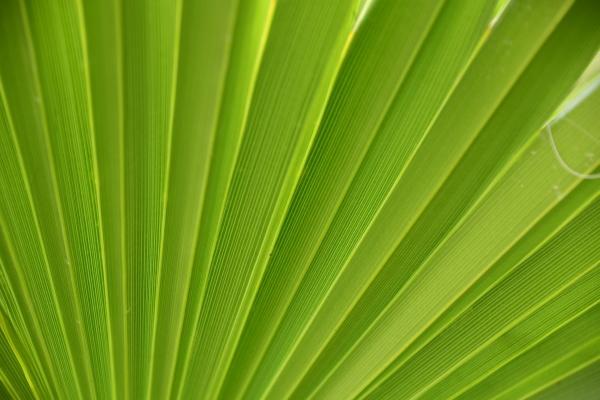 palmblätter, in, der, provinz, alicante, costa - 28217554