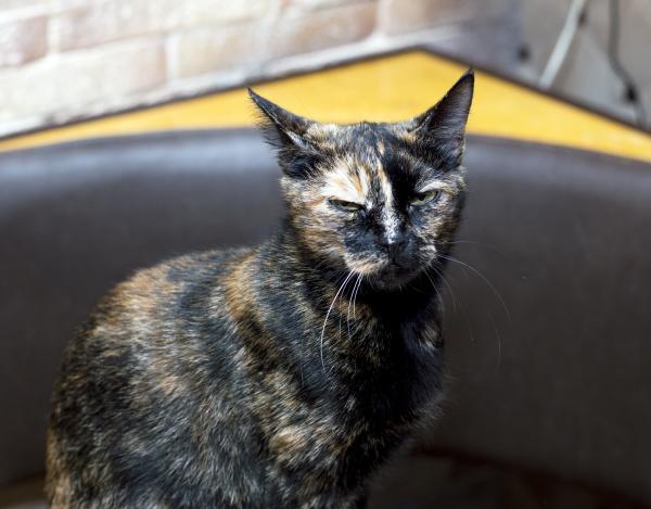motley die katze sitzt an der