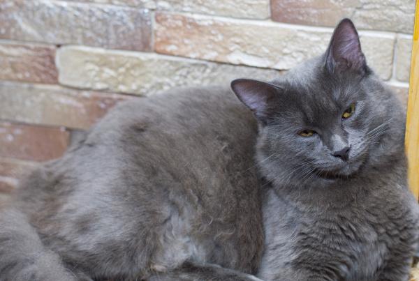 graue katze an einer ziegelmauer
