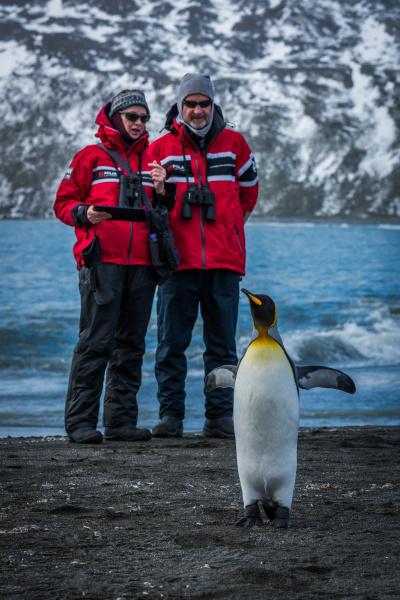 mann und frau beobachten koenig pinguin