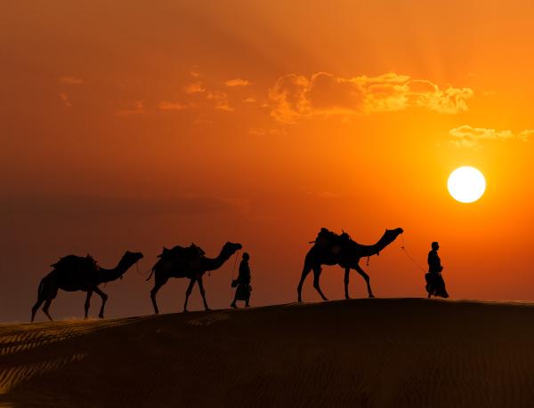 zwei kameltreiber kameltreiber mit