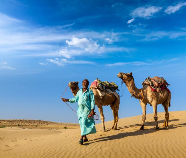 cameleer kamelfahrer mit kamelen