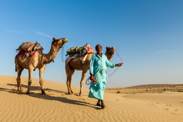 kameleer, , kameltreiber, , mit, kamelen - 28467433