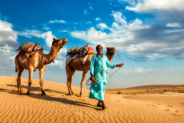 kameleer, kameltreiber, mit, kamelen, in, den - 28467432