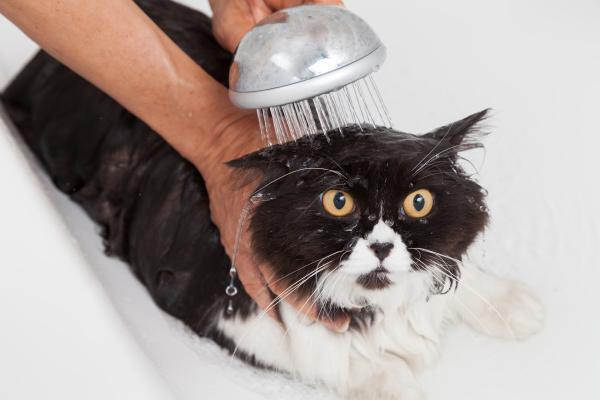 baden einer katze