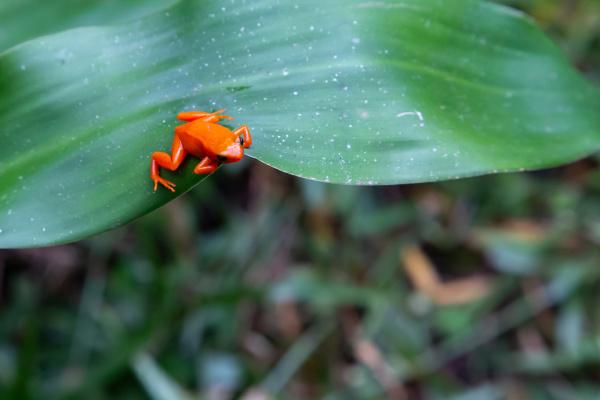 ein kleiner orangener frosch auf einem