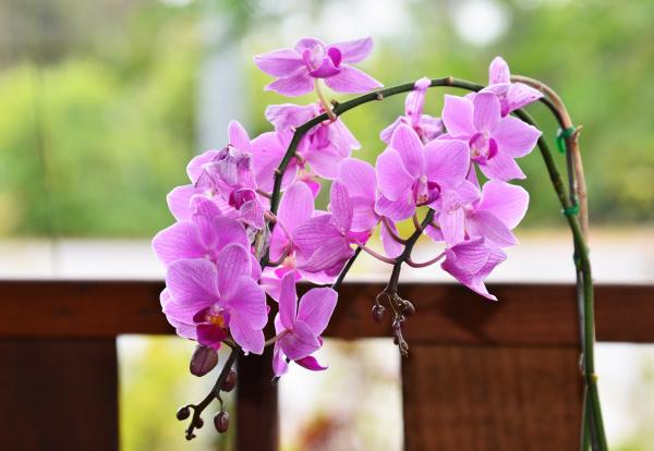 beautiful, purple, orchid - 28597315