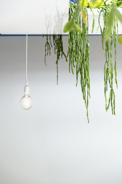 haengepflanze und gluehbirne