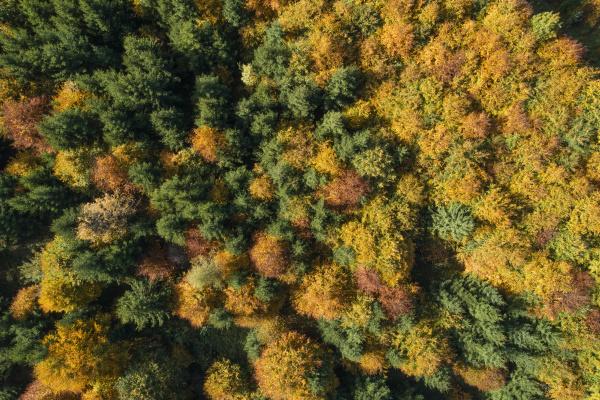 drohnenansicht des laubwaldes im herbst