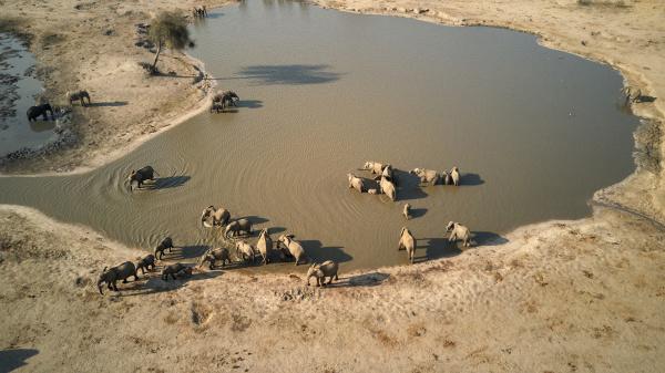 drohnenansicht von elefanten am wasserloch im