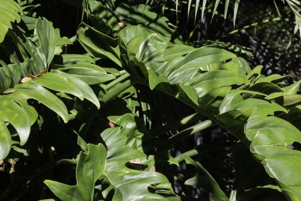 tropische, gartenpflanzen, im, sommer - 28949903