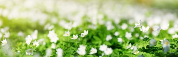 holz mit fruehlingsblumen