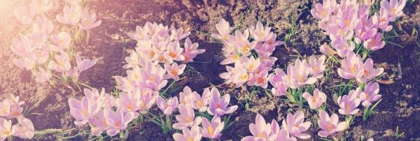 panoramablick auf fruehlingsblumen im park