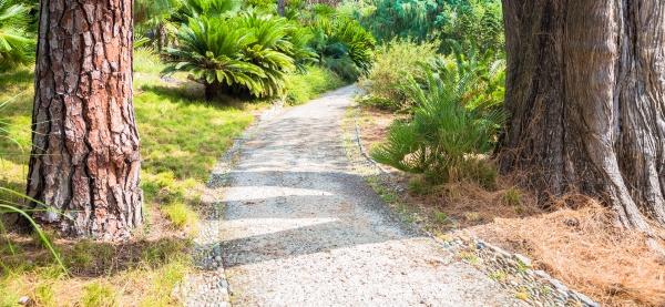 friedlicher weg im botanischen garten