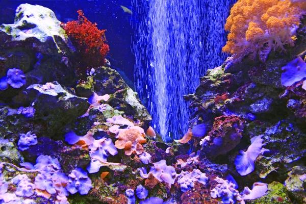 schoenes meerwasseraquarium mit fischen und korallen