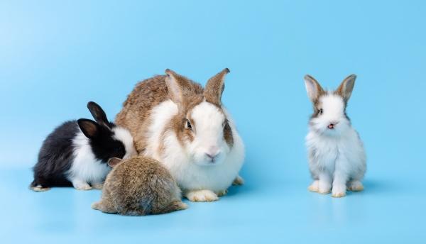 mutter kaninchen und drei neugeborene hasen