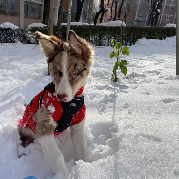 der grosse historische schneefall in madrid